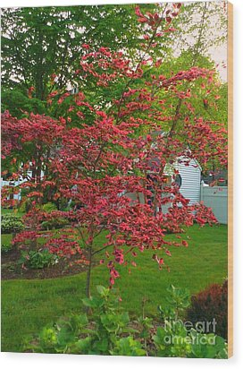 Wood Print featuring the photograph Pretty Pink Beech Tree by Becky Lupe