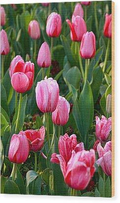 Pretty Pink Wood Print by Joan Bertucci