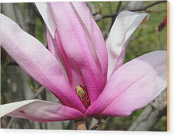 Pretty Pink Magnolia Wood Print by Judy Palkimas
