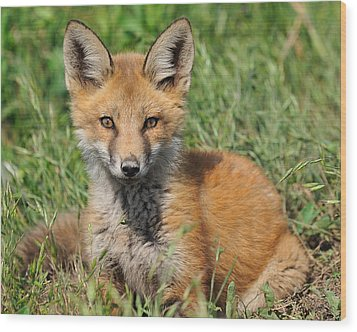 Pretty Red Fox Kit Wood Print by Angel Cher