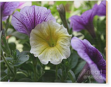 Pretty Yellow And Purple Petunias Wood Print by D Wallace