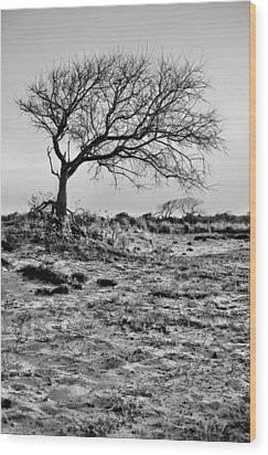 Prevailing Bw Wood Print by JC Findley