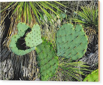 Prickley Hearts Wood Print by Cindy Croal