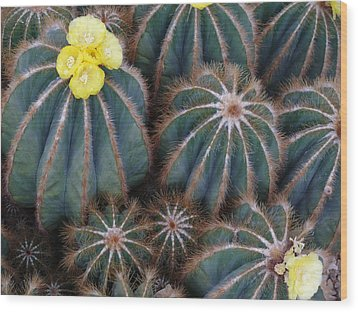Prickly Beauties Wood Print by Evelyn Tambour