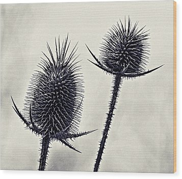 Prickly Wood Print by John Hansen