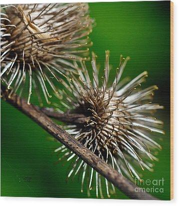 Prickly Wood Print by Lois Bryan
