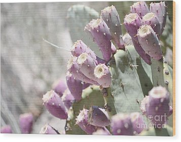 Prickly Pear Cacti Wood Print by Andrea Hazel Ihlefeld