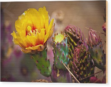 Prickly Pear Cactus Wood Print by Swift Family
