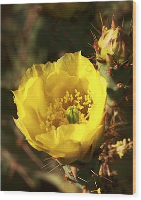 Prickly Pear Flower Wood Print by Alan Vance Ley
