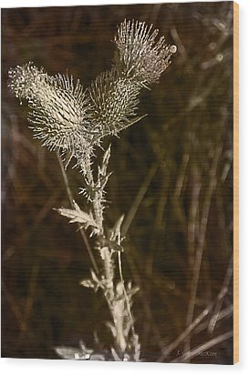 Prickly To The End Wood Print by Jo-Anne Gazo-McKim