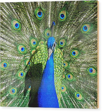 Pride Of India Wood Print