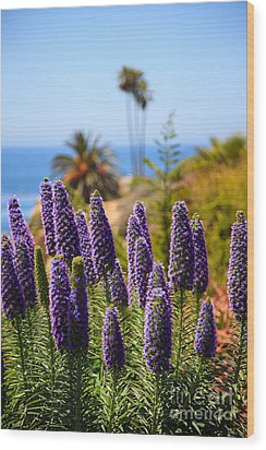 Pride Of Madeira Flowers In Orange County California Wood Print by Paul Velgos