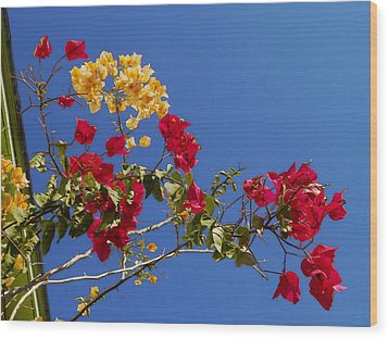 Wood Print featuring the photograph Primary Colors by Ginny Schmidt