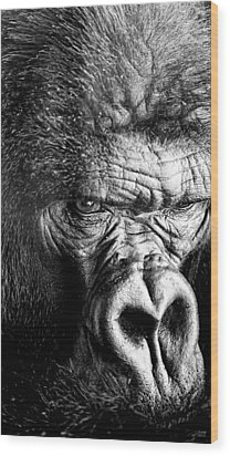Primate Wood Print by David Millenheft