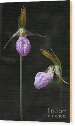 Prince Edward Island Lady Slippers Wood Print