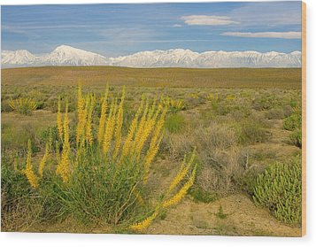 Wood Print featuring the photograph Princes Plume And Mount Tom - Spring Wildflowers Owens Valley Eastern Sierra California by Ram Vasudev