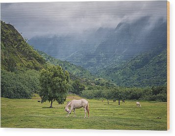 Pristine Pastures  Wood Print by Hawaii  Fine Art Photography