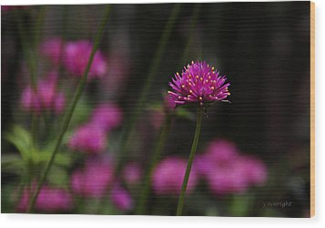 Pretty In Pink Wood Print by Yvonne Wright