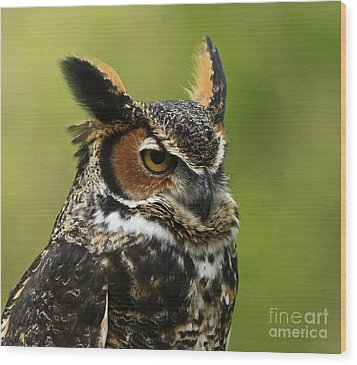 Profile Of A Great Horned Owl Wood Print by Inspired Nature Photography Fine Art Photography