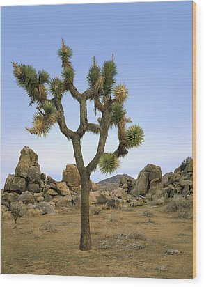 Profile Of A Joshua Tree Wood Print