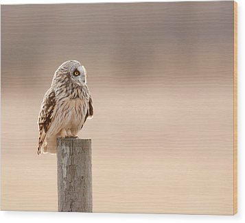 Profile Of A Short-eared Owl 1 Wood Print