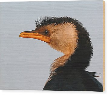 Profile Of A Young Cormorant Wood Print