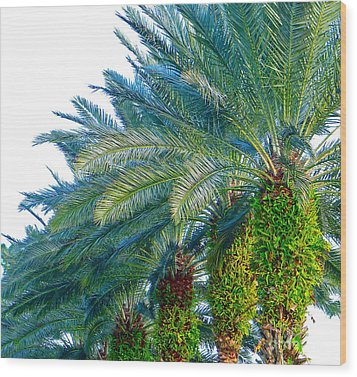 Wood Print featuring the photograph Progression Of Palms by Joy Hardee