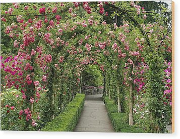Wood Print featuring the photograph Rose Promenade   by Natalie Ortiz