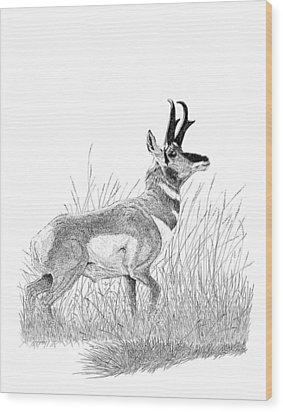 Pronghorn Wood Print