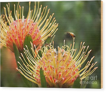 Wood Print featuring the photograph Protea Flowers Attracting Bee  by Alexandra Jordankova