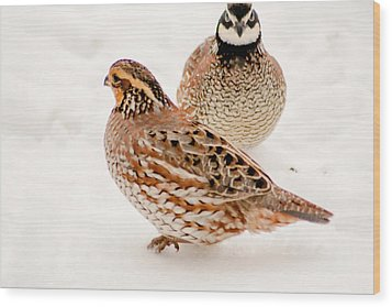 Protective Quail Wood Print by Dawn Romine