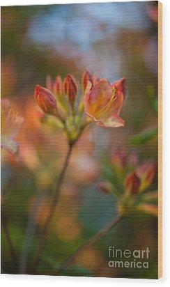 Proud Orange Blossoms Wood Print by Mike Reid