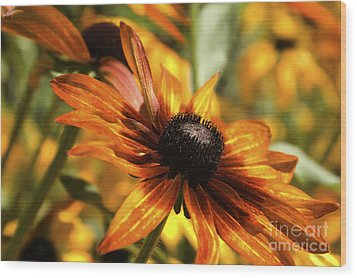 Wood Print featuring the photograph Proud Orange by Catherine Fenner