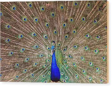 Wood Print featuring the photograph Proud Peacock by Geraldine DeBoer