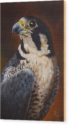 Proud - Peregrine Falcon Wood Print