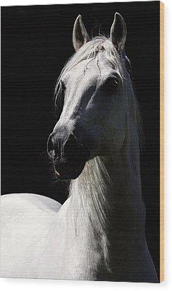Proud Stallion Wood Print