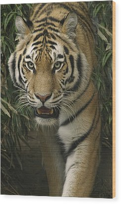 Wood Print featuring the photograph Prowling by Cheri McEachin