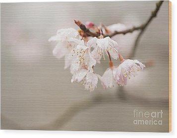 Prunus Hirtipes Wood Print by Anne Gilbert