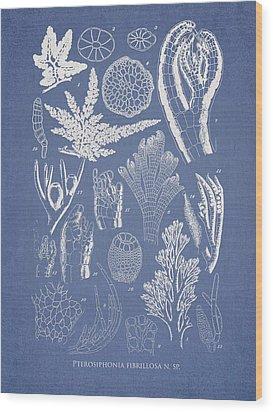 Pterosiphonia Fibrillosa Wood Print by Aged Pixel
