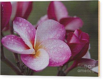 Pua Melia Floral Celebration Wood Print by Sharon Mau