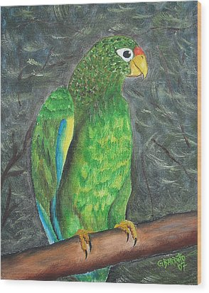 Puerto Rican Parrot Wood Print by Gloria E Barreto-Rodriguez