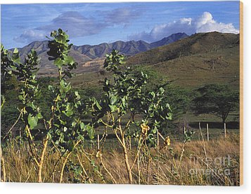 Puerto Rico Cayey Mountains Near Salinas Wood Print by Thomas R Fletcher