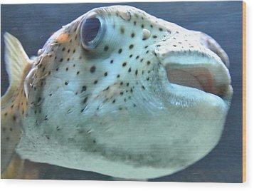 Puffer Fish Wood Print by Amber Davenport