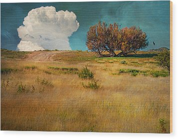 Puffy Cloud Wood Print by Carolyn Dalessandro
