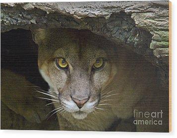 Puma Wood Print by Bob Hislop