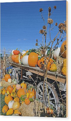 Pumpkin Farm Wood Print