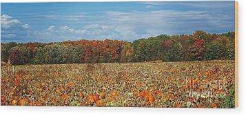 Pumpkin Patch - Panorama Wood Print by Gena Weiser