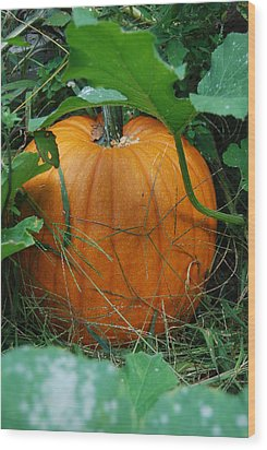 Wood Print featuring the photograph Pumpkin Patch by Ramona Whiteaker