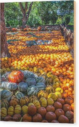 Pumpkin Patch Wood Print by Ross Henton