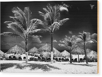 Punta Palms Wood Print by John Rizzuto